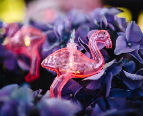 foto di un fenicottero tra i fiori